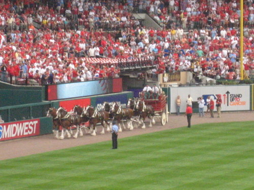 asgclydesdales.JPG